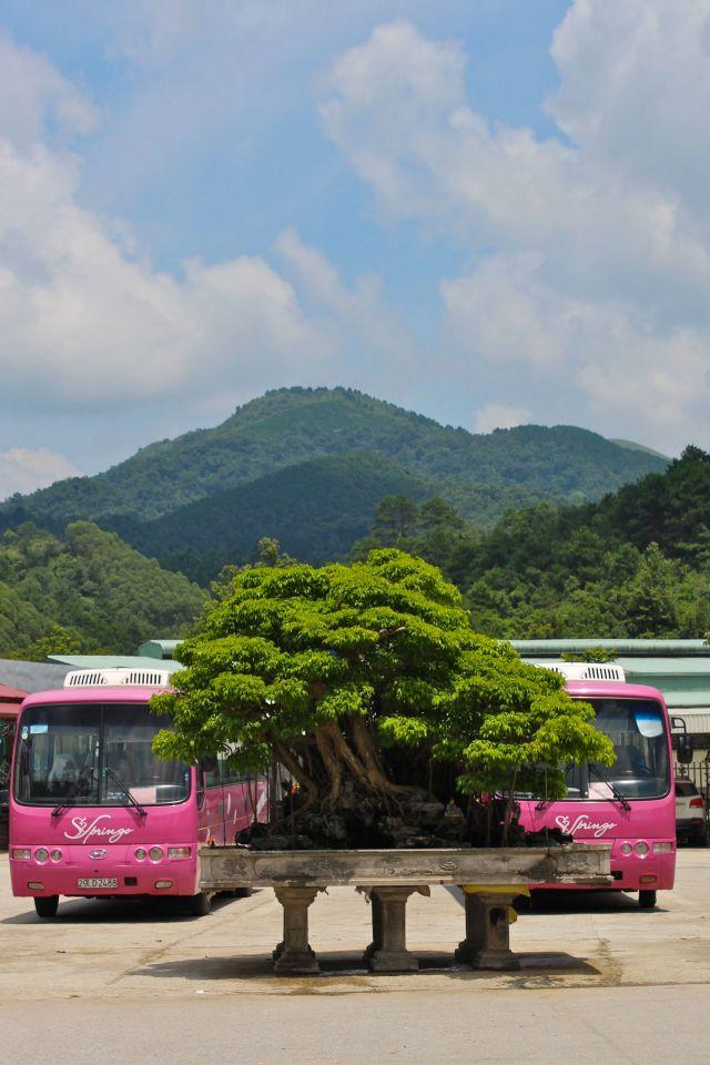 Minuature trees