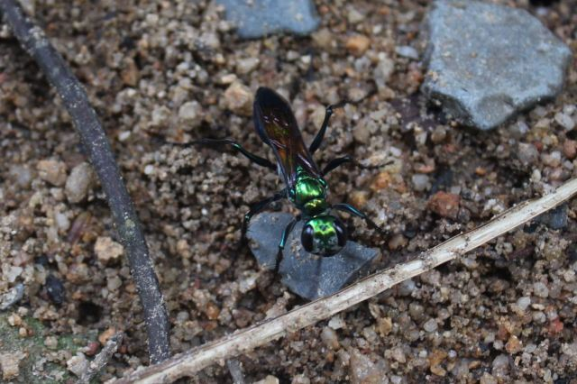 Beautiful ant
