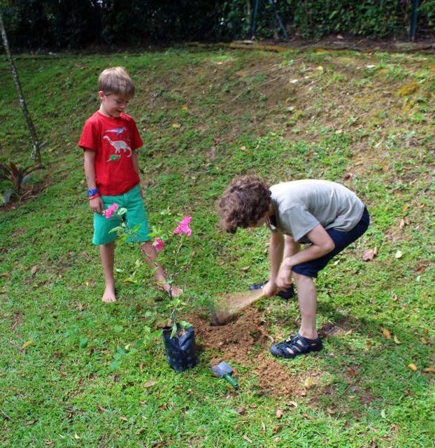 Planting the Bougainvillaea 3